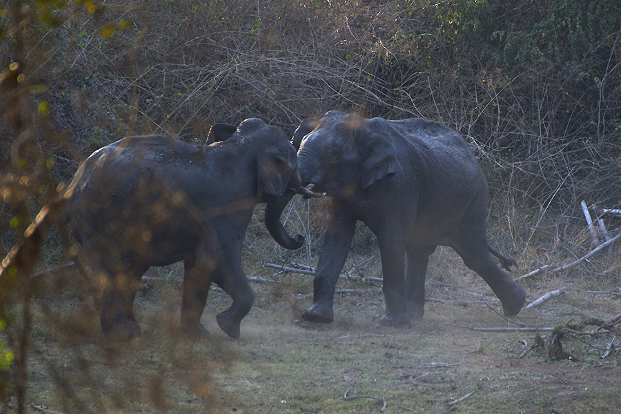 Elephants, Nagarahole National Park, Kabini, Karnataka